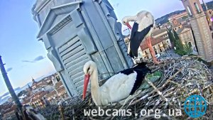Webcam at the storks nest in the town of Alcala de Henares