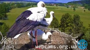 Webcam at the storks nest, Lindheim, Germany