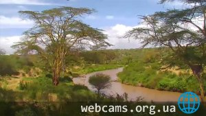 African River Wildlife Webcam