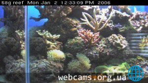 Octocoral Cam