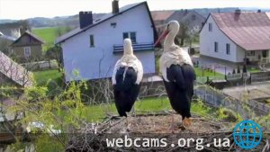 Webcam in the nest of storks in Novy Kamen